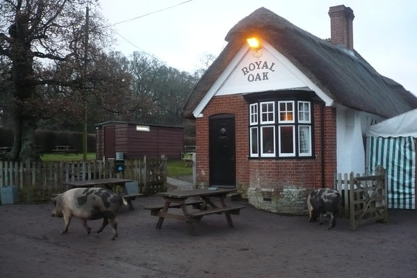 The Royal Oak, Fritham